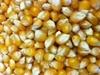 Monster Mushroom Popcorn Kernels