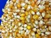 Picture of Pop Weaver Gourmet Popcorn - 1 gal. YELLOW